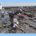【磯の生きものを観察しよう】日本財団海と日本PROJECTinみやざき2018#2